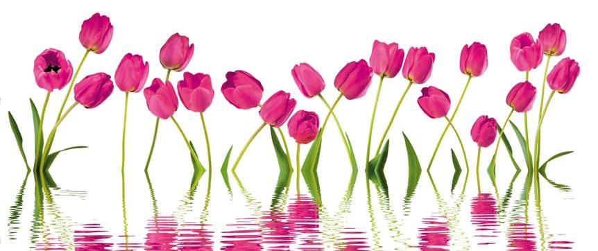 Titelbild Hygienekatalog - magenta Tulpen spiegeln sich im Wasser