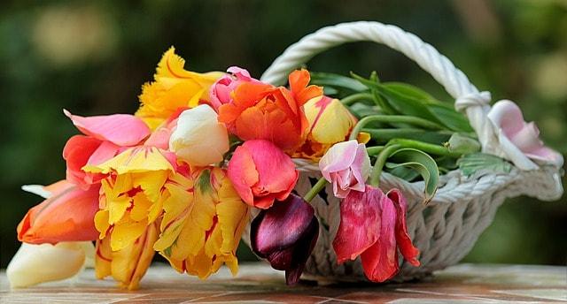 Bunter Tulpenstrauß im dekorativen weißen Geschenkkörbchen