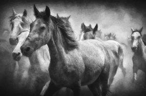 Ölgemälde Pferde