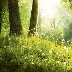 Waldboden grün mit Pflanzen und weißen Blumen für Raumduftsystem Paradise Air Bar